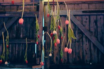 Tulip Hang.jpg