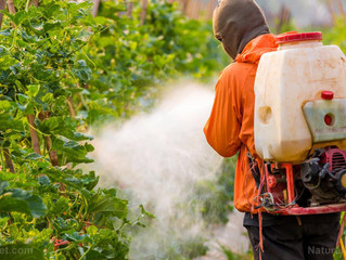 Brain-damaging neurotoxic pesticide found in hundreds of foods: EPA allows pesticide lobby to dictat