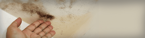 black mold on a ceiling