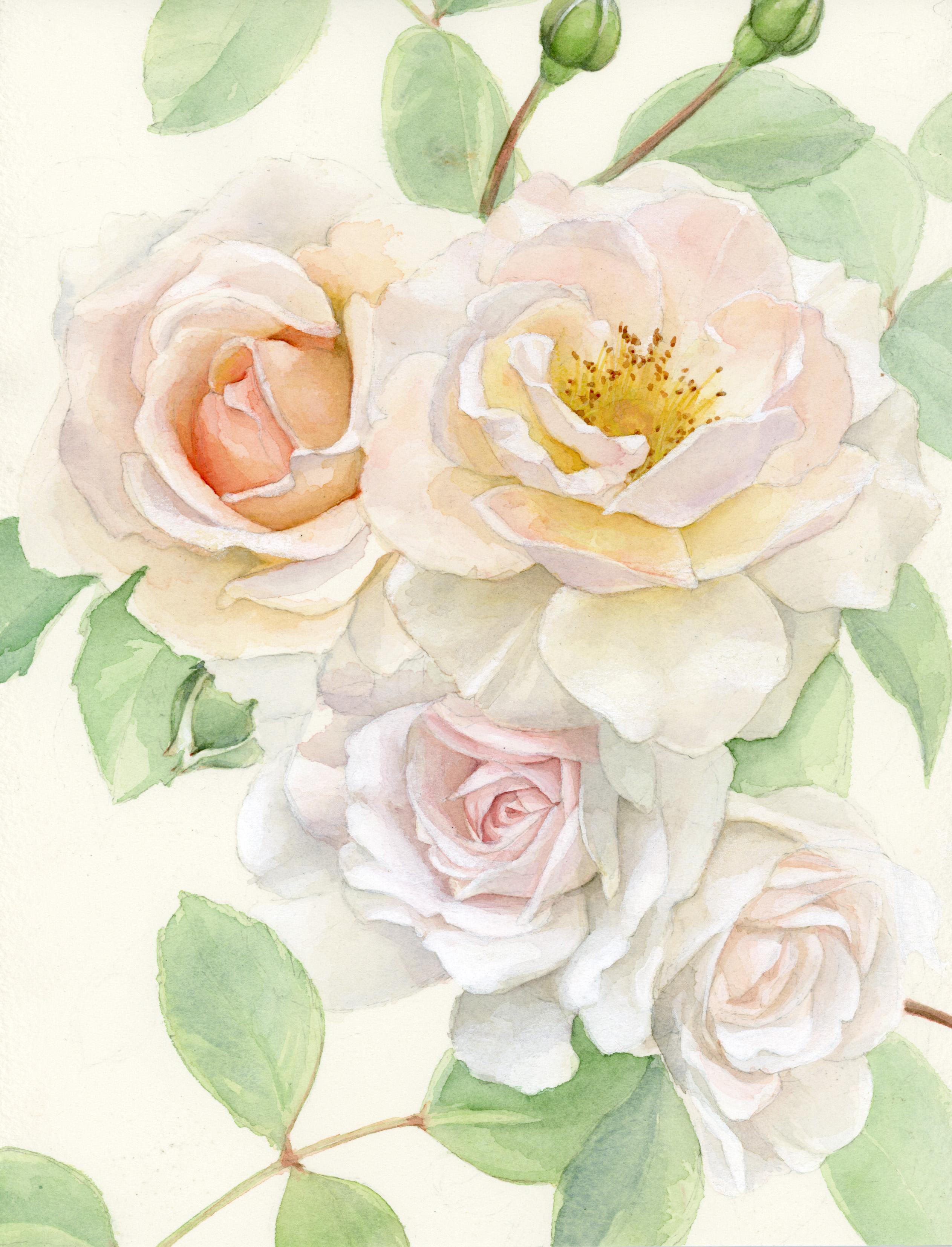 water roses