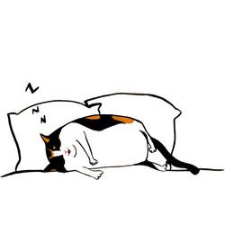 Snoozing Callie