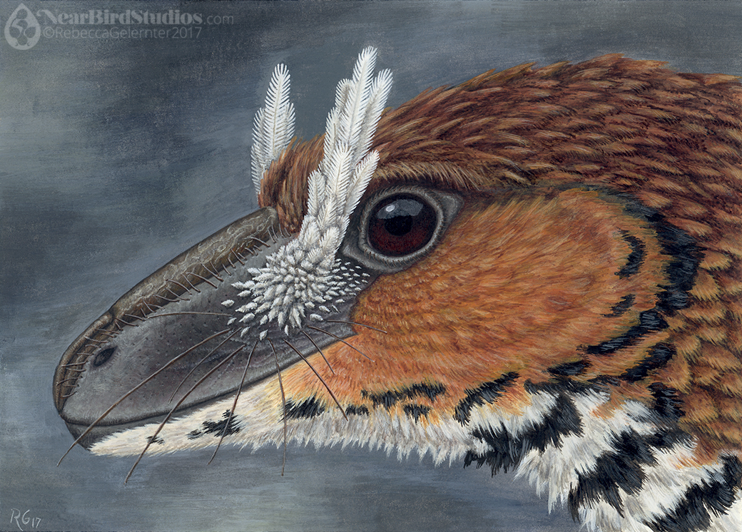 Troodon Portrait small watermarked