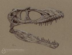 Albertosaurus watermark