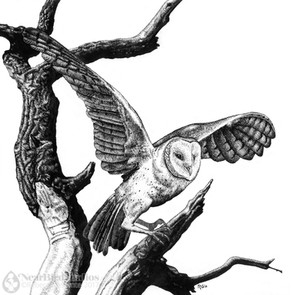 Scratchboard Owl