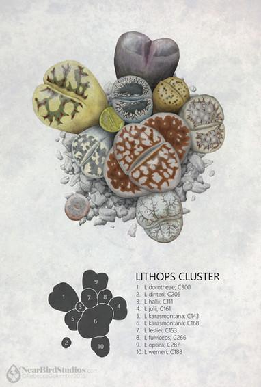 Lithops Cluster