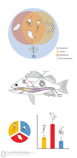 Fish Figure