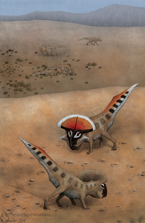 Protoceratops Display