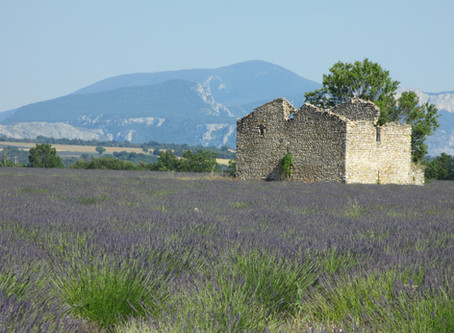 Lavender lovers: beware!