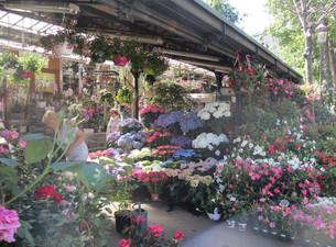 Flower-Market-Paris.jpg