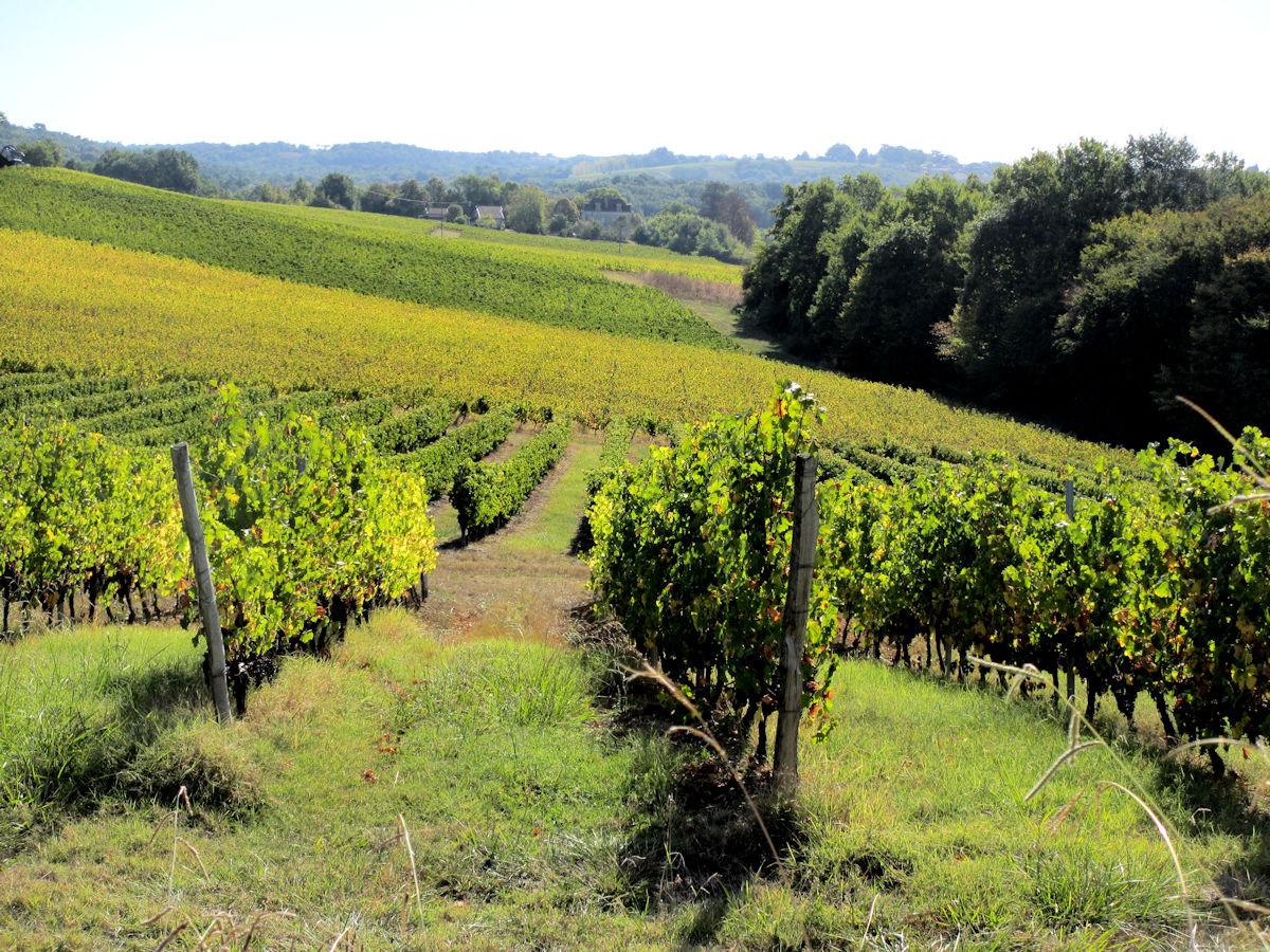 Vineyard-Bordeaux.jpg