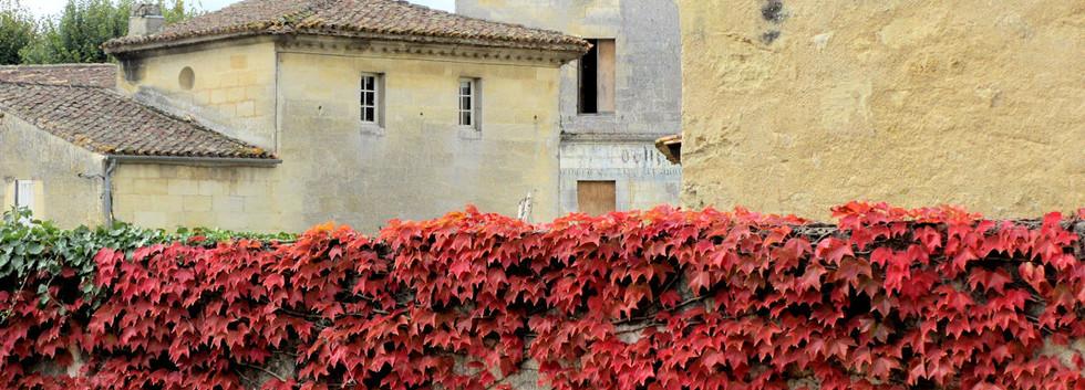Red-ivy-St-Emilion-France.jpg