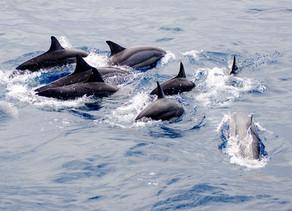 經典賞鯨豚體驗