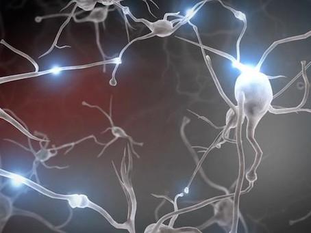¿Cómo funciona el cerebro del bebé?
