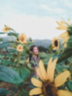 Sunflowers at Sirao Farm.jpeg