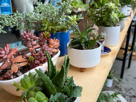 Succulents for Sale + Upcoming Events!