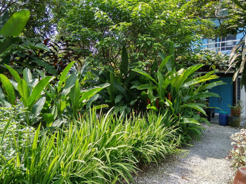 bluehouse front plants.jpg