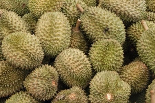 Durian Kampung-end of season-