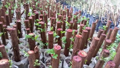 Fertilizer Photo 2.jpg