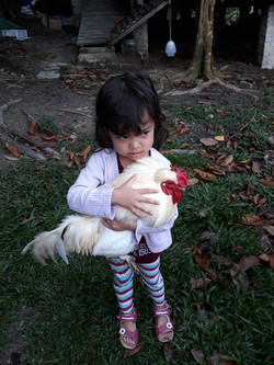 Takes Skill to Catch a Chicken