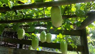 Fertilizer Photo 1.jpg