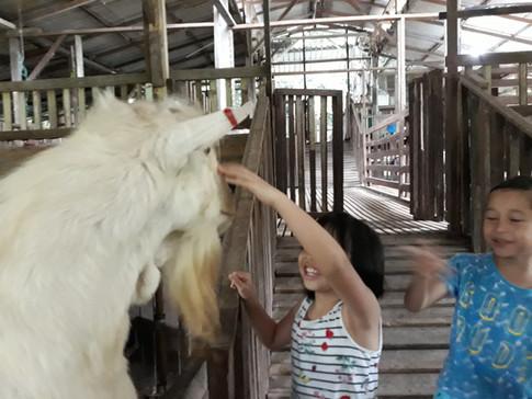 The Goat That Runs The Farm