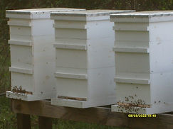 Bee Hive Frames, Boxes, Bottoms, and tops
