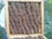 Warre beehive combs