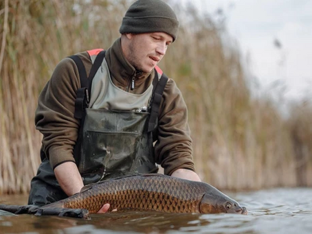 United Kingdom Freshwater Fish Species