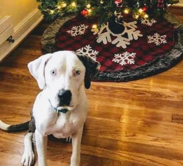 Rafa's Story: Surrogate Healing for a Dog with a Broken Heart