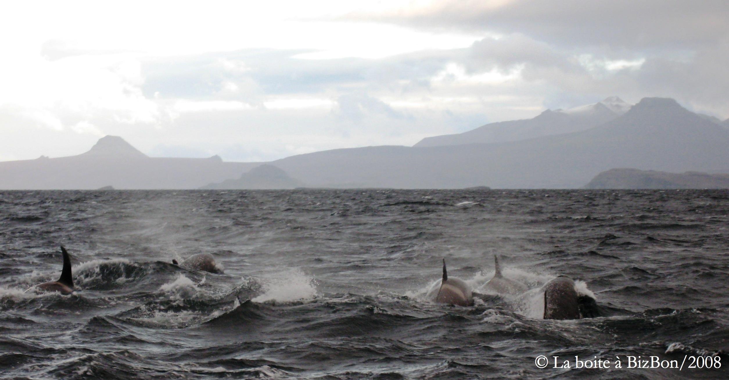 Famille d'orques (101)