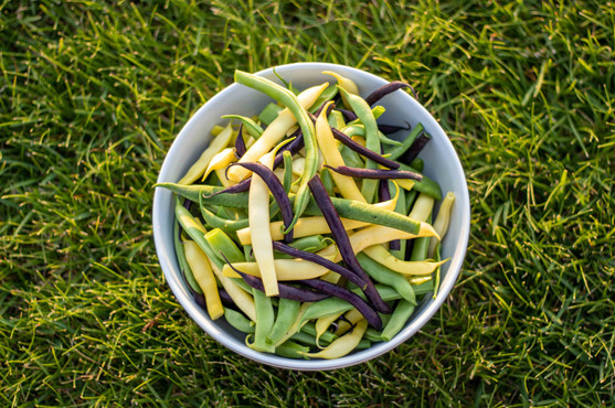 Beans in the Grass