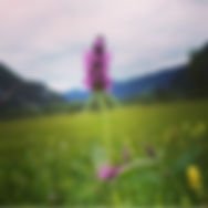 Betony kukka.jpg