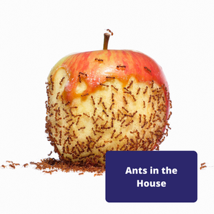 ants-in-house-picture.png