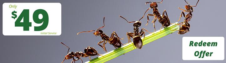 environmentally-friendly-pest-control-di