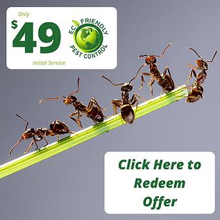 redeem-offer-for-49-eco-friendly-pest-co
