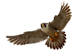hawk-clipart-png-8.png