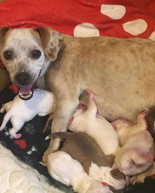 lulu-puppies-medical.jpeg