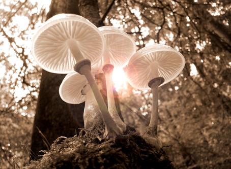 Introduction aux champignons mycorhiziens - 6 / 6