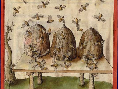 Ruche de biodiversité - Pour que l'abeille retrouve sa nature sauvage