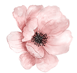 poppy-watercolor.png