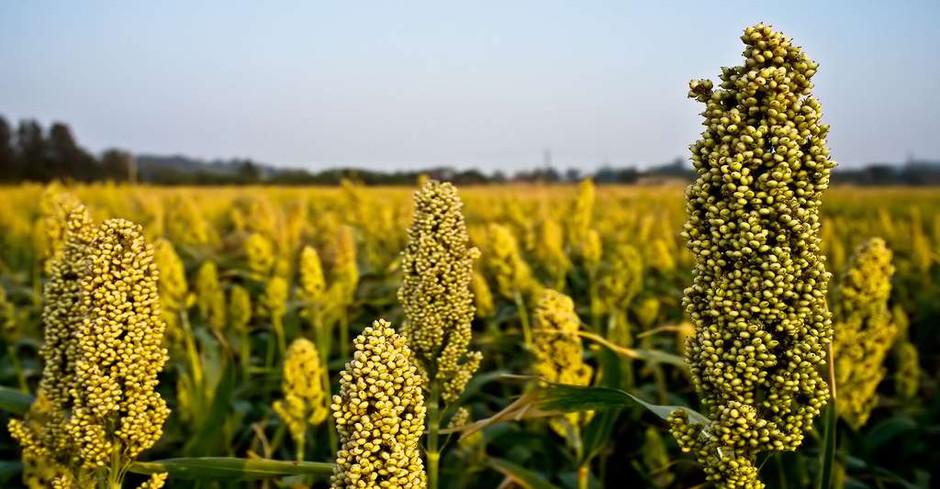 Évolutions climatiques & impacts mondiaux : les enjeux agricoles dépendent de nos choix alimentaires