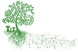 Le carbone liquide, un élément méconnu - Mycorhyzes
