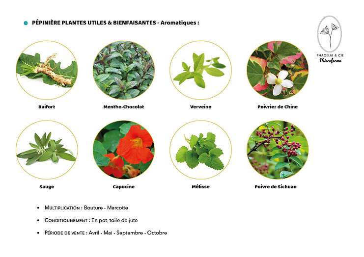 Catalogue-Aromatiques.jpg