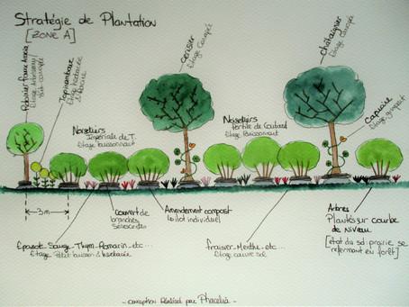 Conception d'un jardin-forêt