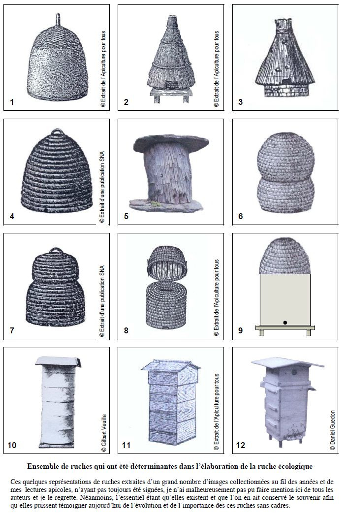 Source : Encyclopédie de A à Z - Apiculture écologique