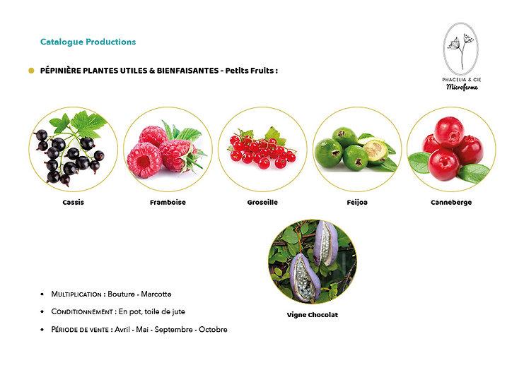 Catalogue-PetitFruit.jpg