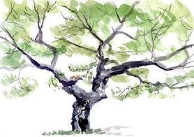 arbre-Aquarelle.jpg