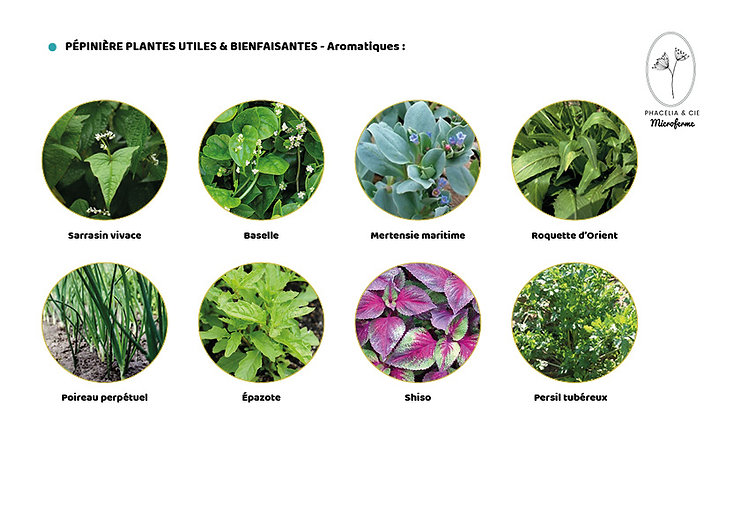 Catalogue-Aromatiques2.jpg