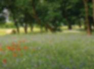 fleurs-sauvages.jpg