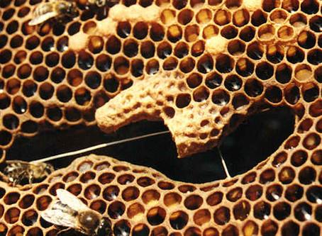 Le monde merveilleux des abeilles